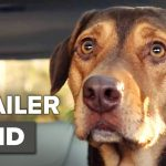 A Dog's Way Home International Trailer #1 (2019)   Movieclips Trailers
